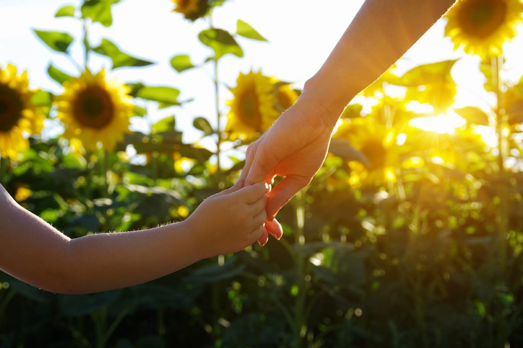 Parent holding young child's hand in sunflower field